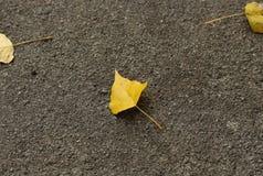 Ein kleines gelbes Blatt liegt auf grauem Asphalt Rot und Orange färbt Efeublattnahaufnahme lizenzfreies stockbild