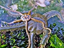 Ein kleines Geschöpf am Ufer lizenzfreies stockfoto