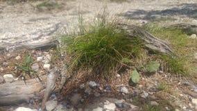Ein kleines Gras des Flecken-O Stockbild