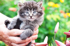 Ein kleines Kätzchen hielt an Hand im Garten in den Blumen Stockfoto