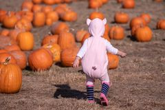 Ein kleines Kind in einem Ferkelkostüm laufen gelassen auf einem Kürbisflecken lizenzfreie stockfotos
