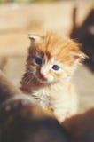 Ein kleines lustiges rotes Kätzchen mit blaue Augen in einem hölzernen rustikalen BO Stockbild