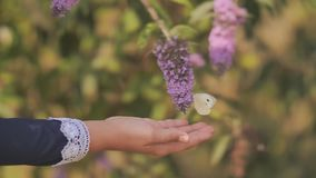 Ein kleines Mädchen fängt Schmetterlinge auf den Büschen mit Blumen stock footage