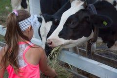 Ein kleines Mädchen zieht eine Kuh mit Heu ein Lizenzfreies Stockbild