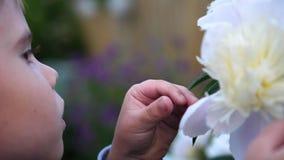 Ein kleines nettes Baby genießt leicht den Geruch von Blumen Das Kind hebt eine Blume auf und inhaliert seinen Duft blühen stock video
