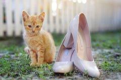 Ein kleines rotes Kätzchen sitzt nahe bei Frauen ` s Schuhen auf der Straße Lizenzfreies Stockfoto