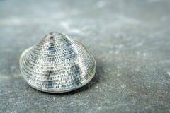 Ein kleines Shell Lizenzfreies Stockfoto