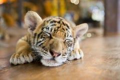 Ein kleines Tigerstillstehen Stockbild