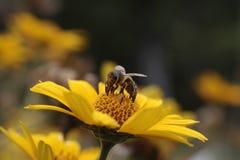 Ein kleines Wunder der Natur Lizenzfreie Stockfotos