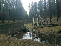 Ein Klotztipi nahe bei The Creek lizenzfreie stockbilder