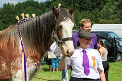 Ein Konkurrent zeigt ihr Pferd an einer Show stockfotografie