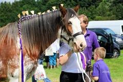 Ein Konkurrent zeigt ihr Pferd an einer Show stockfotos