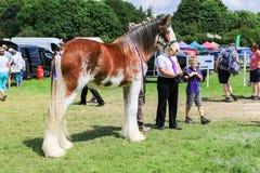 Ein Konkurrent zeigt ihr Pferd an einer Show lizenzfreie stockfotografie