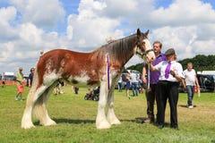 Ein Konkurrent zeigt ihr Pferd an einer Show lizenzfreies stockbild
