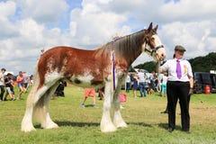 Ein Konkurrent zeigt ihr Pferd an einer Show stockbild