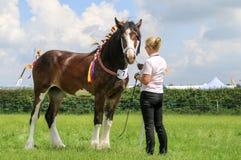 Ein Konkurrent zeigt ihr Pferd an einer Show stockbilder