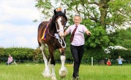 Ein Konkurrent zeigt ihr Pferd an einer Show lizenzfreie stockbilder