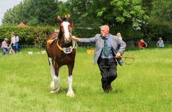 Ein Konkurrent zeigt sein Pferd an einer Show lizenzfreie stockbilder