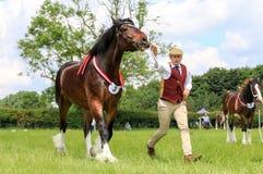 Ein Konkurrent zeigt sein Pferd an einer Show lizenzfreie stockfotografie
