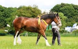 Ein Konkurrent zeigt sein Pferd an einer Show stockfoto