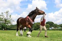 Ein Konkurrent zeigt sein Pferd an einer Show lizenzfreies stockfoto