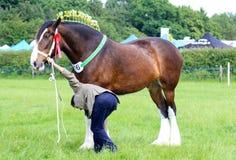 Ein Konkurrent zeigt sein Pferd an einer Show stockbilder
