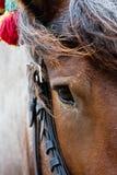 Ein Kopf des Pferds. Lizenzfreies Stockfoto