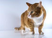 Ein Kopf einer Katze Stockbilder