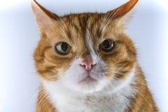 Ein Kopf einer Katze Lizenzfreie Stockfotografie
