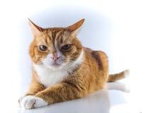Ein Kopf einer Katze Stockfoto
