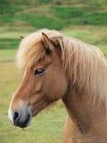 Ein Kopf eines braunen Pferds Stockbild