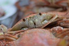 Ein Krabbe ` s Letztblick Stockfotos