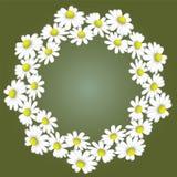 Ein Kranz von weißen Gänseblümchen auf einem grünen Hintergrund Lizenzfreies Stockfoto