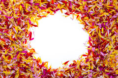 Ein Kreis innerhalb der Blumenblätter Lizenzfreie Stockfotos