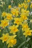 Ein lächelndes Frühlingsgeschenk lizenzfreie stockbilder