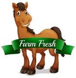 Ein lächelndes Pferd mit einem neuen Aufkleber des Bauernhofes Stockfoto