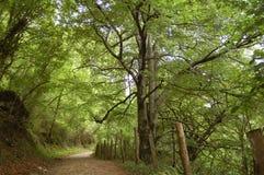 Ein ländlich idyllisch Pfad im Wald lizenzfreie stockbilder