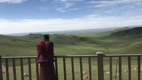 Ein Lama betet am endlosen Grasland lizenzfreie stockbilder