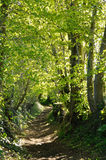 Ein Landweg in Normandie Lizenzfreie Stockfotografie
