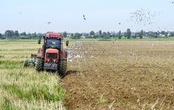 Ein Landwirt auf einem Traktor, der das Land, umgeben durch Vögel pflügt Stockfoto