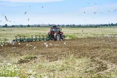 Ein Landwirt auf einem Traktor, der das Land, umgeben durch Vögel pflügt Lizenzfreie Stockfotos