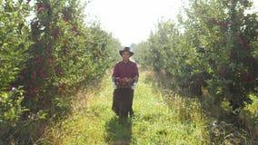 Ein Landwirt, der eine Kiste Äpfel im Garten trägt stock footage