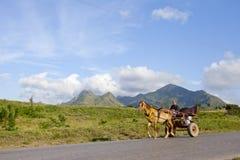 Ein Landwirt in Kuba Stockfotografie