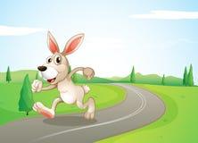 Ein laufendes Kaninchen an der Straße Stockfoto