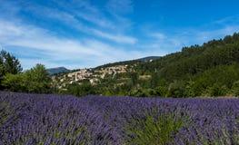 Ein Lavendelfeld mit dem provencal Dorf von Aurel im Hintergrund Stockfoto