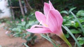 Ein Leben ohne Traum ist wie ein Garten ohne Blumen stockbilder
