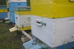 Ein Leben von Bienen in einem Bienenstock Stockbild