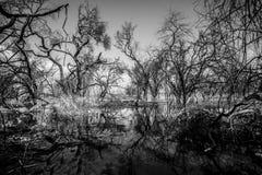 Ein lebloses Land Stockfotografie