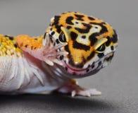 Ein Leopardgecko mit Haltung Gespräch zur Hand Lizenzfreies Stockbild