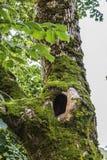 Ein Loch in einem Baum Stockbilder